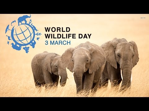 The Future of Wildlife is in Our Hands  | WORLD WILDLIFE DAY