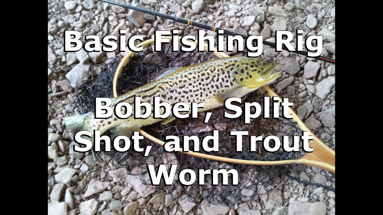 Basic Fishing Rig - Bobber, Split Shot, and Trout Worm ...