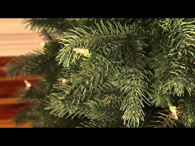 Mountain Spruce Artificial Christmas Tree Travel Video