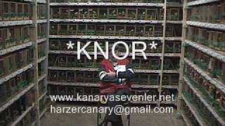malinois waterslager eğitim video www.kanaryasevenler.net