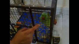 Radhey the talking parrot - Salman khan with Radhey the talking parrot