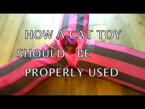 bits of Alvi cat : breaking news - cat playing fanatically with toy
