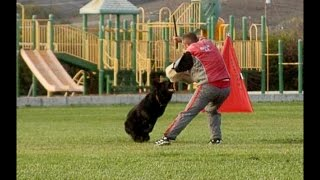 Larry - Ipo/ Schutzhund Protection Trial