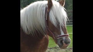 Конь, пришедший к нам из сказки!(животное)