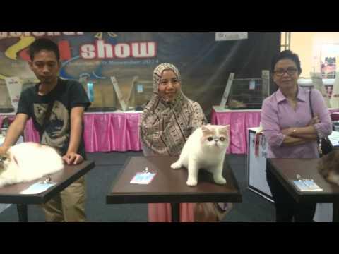 International cat show 8-9 Nov 2015 Jakarta part 2