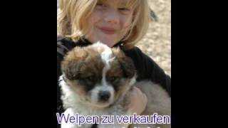 Hund Zu Verkaufen - Wunderschöne Motivationsgeschichte . . .