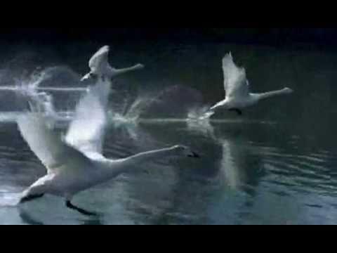 Winged Migration (Le Peuple migrateur) - Trailer