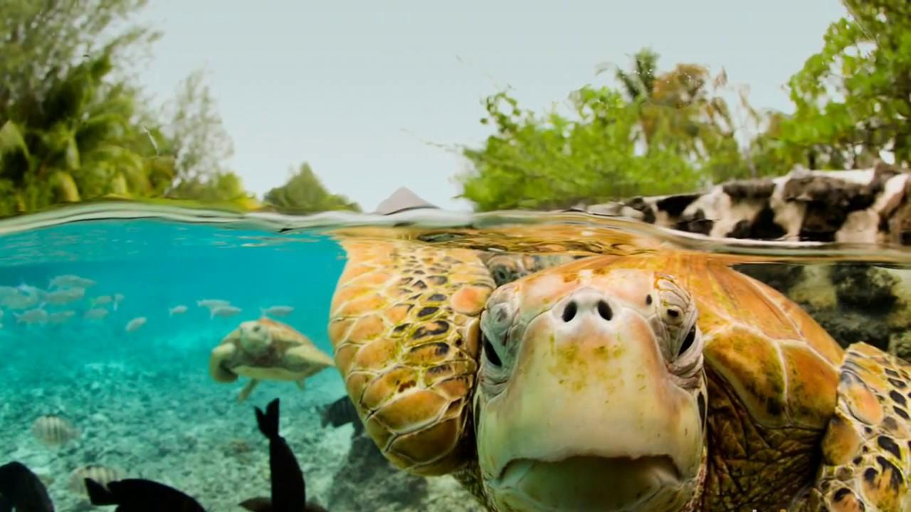 Картинки по запросу морская черепаха