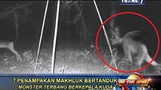 On The Spot - 7 Penampakan Makhluk Bertanduk