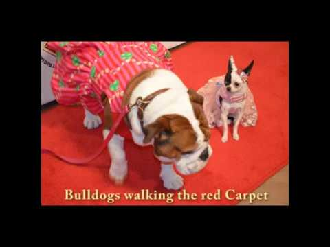 """Beth Stern & Friends """"Bash for the Bulldogs"""" For Long Island Bulldog Rescues 2016"""