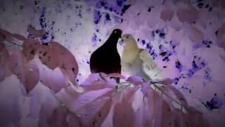 Merzbow - Hatobana Teaser (Rustblade)