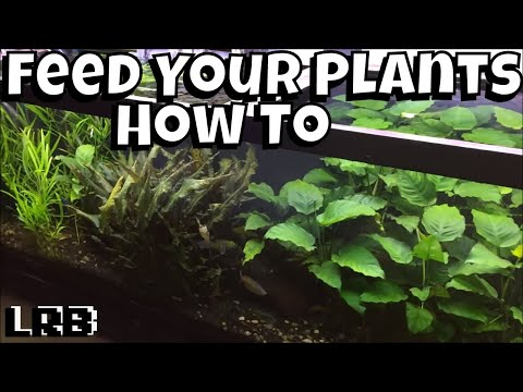 Feed Your Aquariums Plants They Need It!
