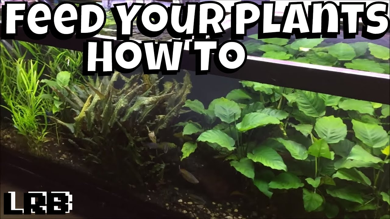feed your aquariums plants they need it youtube