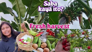 Harvest today: Gulay for hapunan