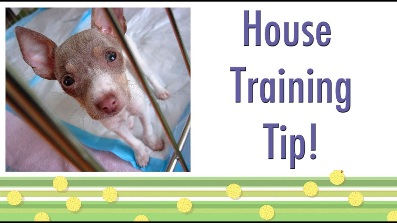 House Training Tip Should Your Dog Ring A Bell Funnydog Tv