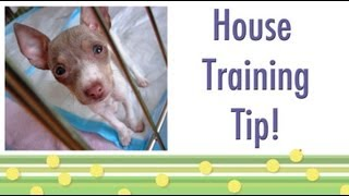 House Training Tip- Should Your Dog Ring A Bell?