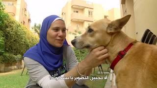 بالفيديو- هكذا تفوق الكلب البلدي المصري  على الأجنبي