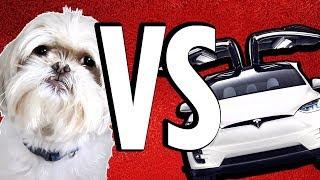 Dog vs Tesla Windshield