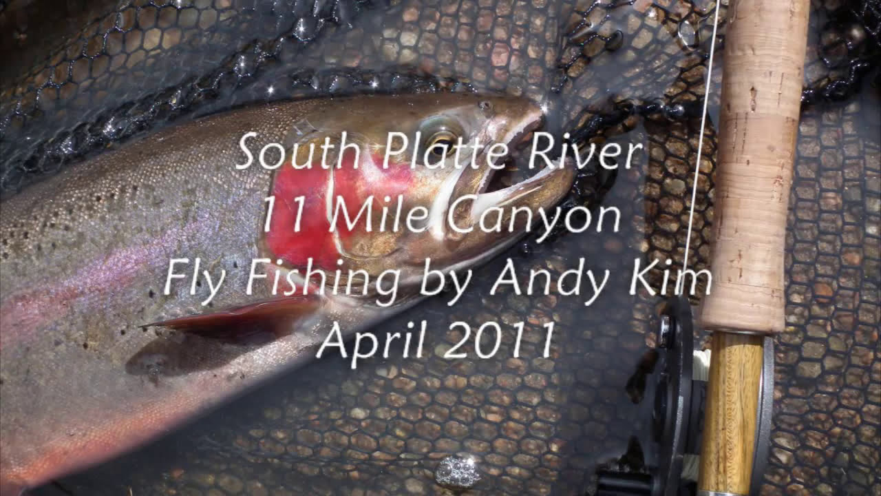 Nice fly fishing 11mile canyon south platte river april for South platte river fishing