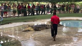 Crocodile show at Langkawi crocodile farm, Malaysia