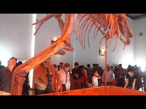 Т.Батаар монголдоо ирэв (Welcome Home -  Tyrannosaurus Bataar)