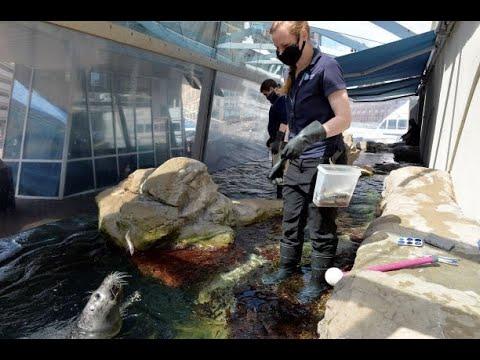 رغم الحظر.. الحيوانات البحرية تلاقي حظها من العناية في بوسطن (فيديو)  - نشر قبل 2 ساعة
