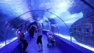 Gambar cover Самый длинный в Европе подводный тоннель в океанариуме Анталии