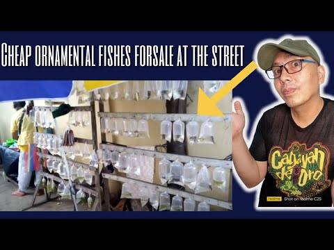 Ornamental Fish Trade In Philippines Will Make You Awe!