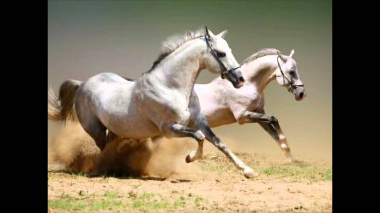 horse wallpaper awesome pair - photo #15