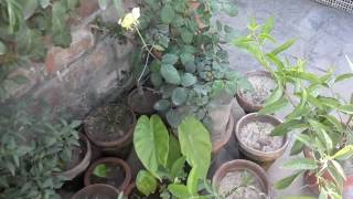 Kitchen Gardening Overview | Beginning Vegetable Gardening April-2016 (Urdu/hindi)