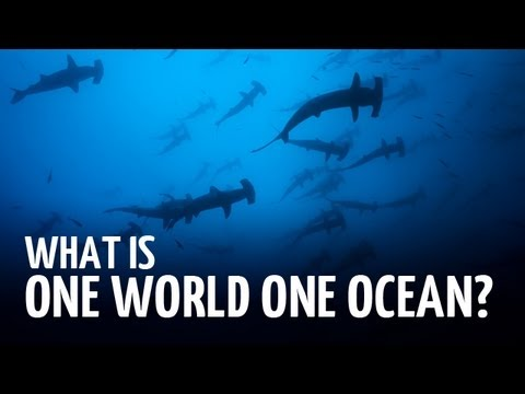 What is One World One Ocean?