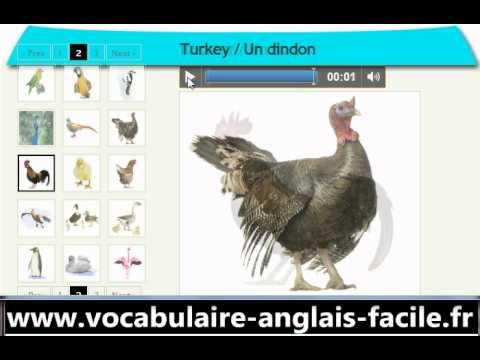 vocabulaire anglais les oiseaux vocabulaire anglais facile youtube. Black Bedroom Furniture Sets. Home Design Ideas