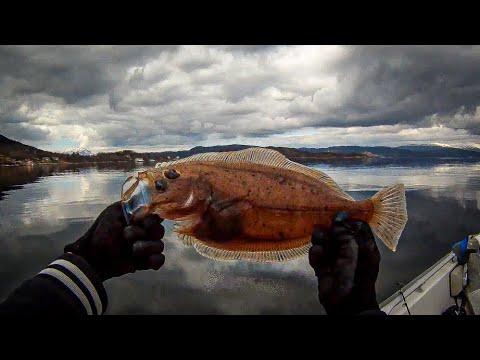 Fiske i Hardangerfjorden #1 | Mars 2015