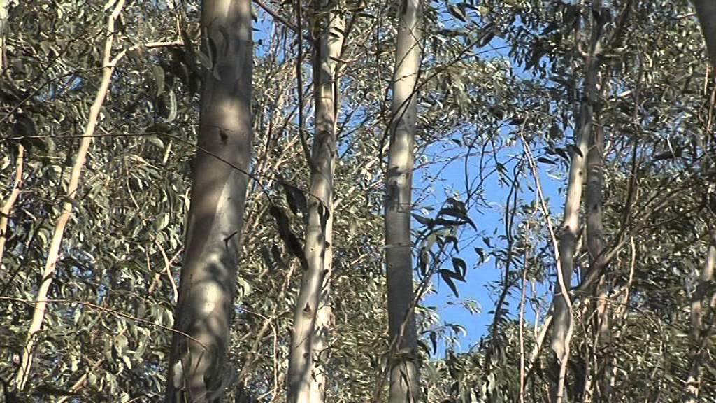 Muskiz ha puesto en marcha un proyecto para divulgar y adecuar la Vía Verde Montes de Hierro