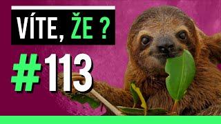#113 ● VÍTE, ŽE...?