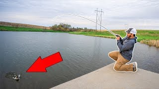 This URBAN Pond was FIRE!!! (Spring Bass Fishing)