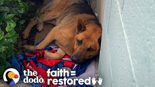 stray-dog-living-on-side-of-a-building-and-too-scared-to-move-the-dodo-faith-restored
