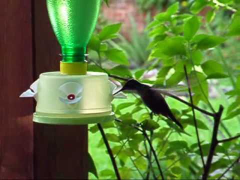 Alimentador para colibr es 03 youtube for Para desarrollar un parque ajardinado