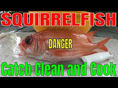 DANGER!!! This Fish Can Hurt YOU!!! Squirrelfish Catch Clean And Cook