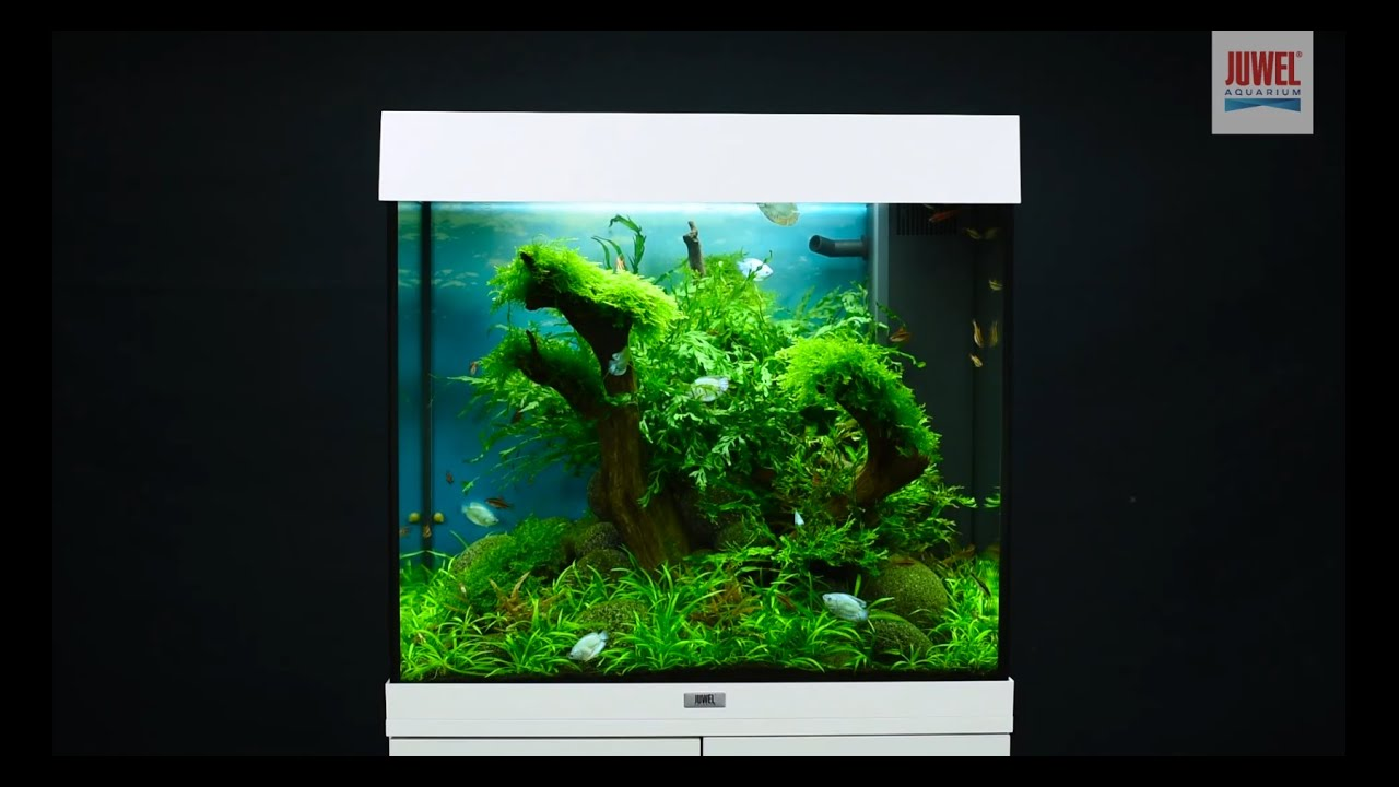 aquarium einrichten juwel aquarium lido 120 einrichtungsbeispiel tutorial youtube. Black Bedroom Furniture Sets. Home Design Ideas