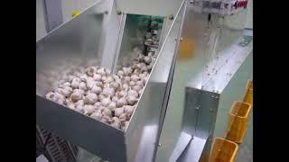 화목제 푸드머신 마늘 껍질 대용량 탈피기2 (garli…