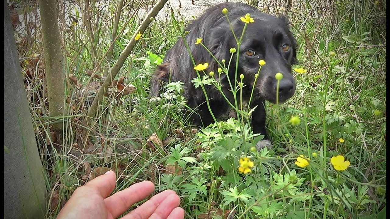 dog-too-scared-to-let-us-save-her-hides-in-the-woods