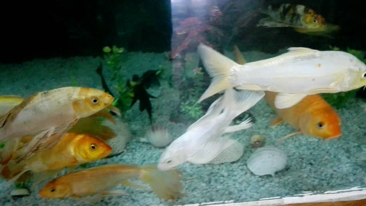 Fish aquarium in bangladesh - Marine Aquarium Of Bangobondhu Safari Park Gazipur Bangladesh