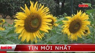 Vườn hoa hướng dương khoe sắc tại  Hoàng Thành Thăng Long