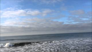 Gray Whale Migration: no one told the dog