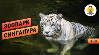 Зоопарк Сингапура - Полный Восторг! Amazing Singapore Zoo