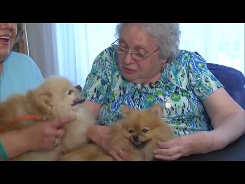 REAL TO REEL --  THERAPY DOGS -- DEC. 5, 2015