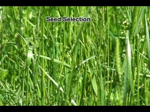 Over Seeding a Pasture