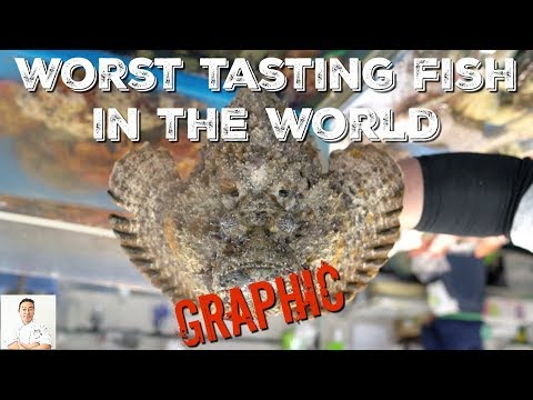 EXTREMELY GRAPHIC: WORLD'S MOST VENOMOUS Fish Is World's Worst Tasting