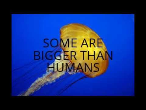 10 FACTS ABOUT JELLYFISH - YouTube